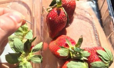 Strawberry needle scare: Australia probe as 'vicious crime' widens