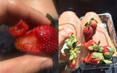 Strawberry needle contamination: Woolworths dumps needle sales after fruit-spiking cases